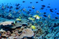 The species supported by coral reefs may die off if the corals switch to a soft-bodied life.