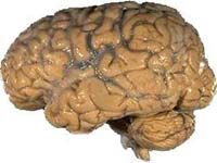 The brain needs to be protected from incoming infections.