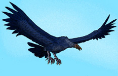 An artist rendering of Argentavis